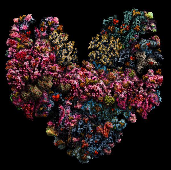 heartbeats No 074